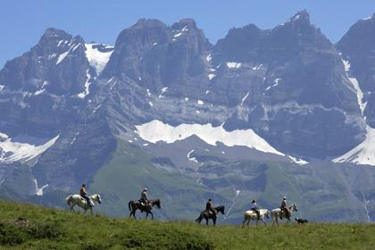 1-chevaux